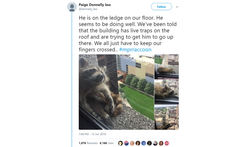 MPRraccoon