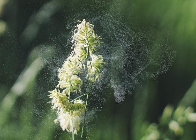 Pollen falling off a plant.