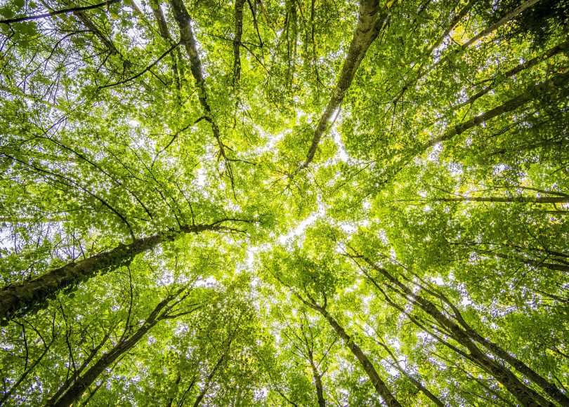 Pexels - A view of a canopy of trees from below.