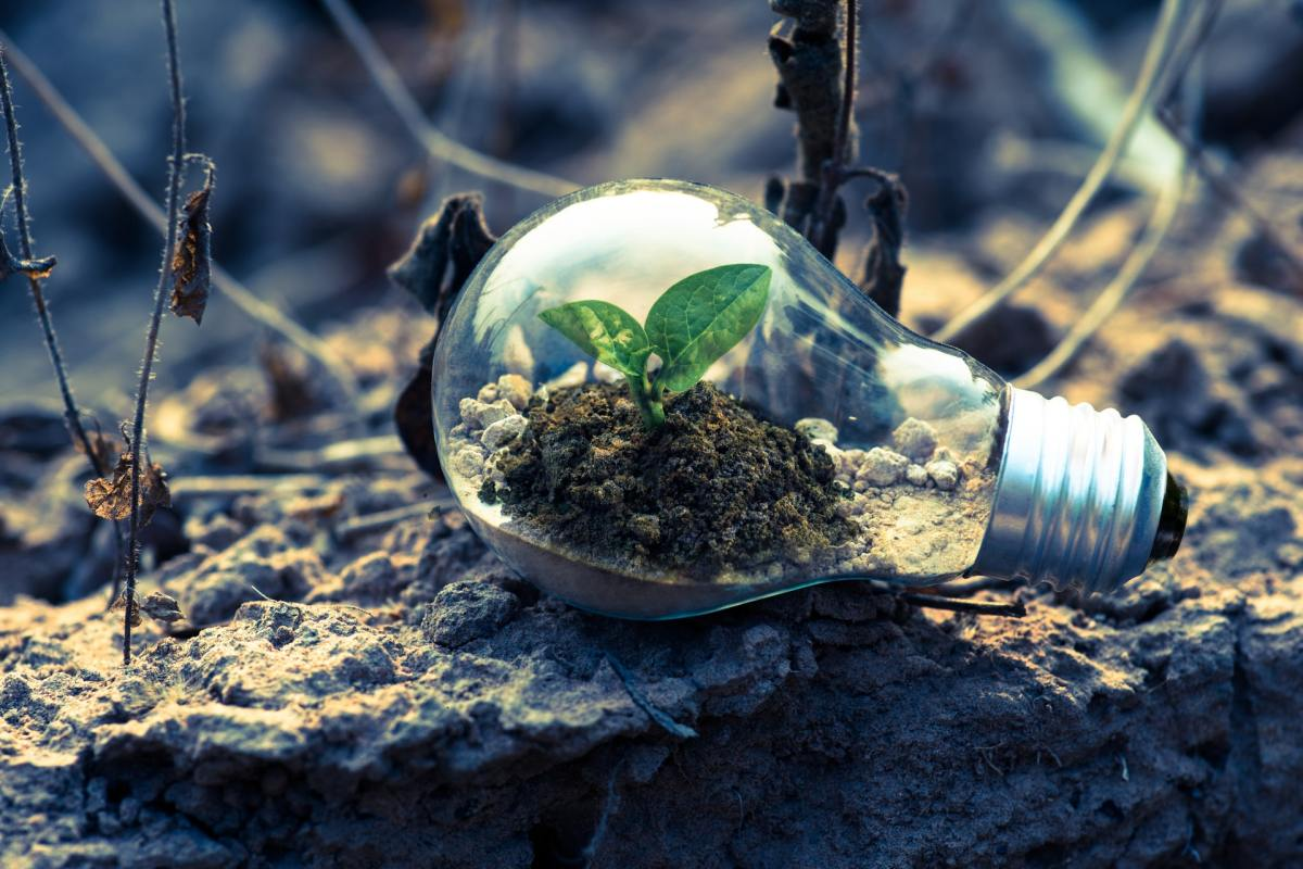 Pexels - A clear light bulb planter on gray rocks
