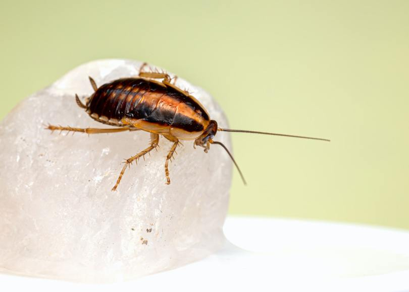 Pexels - A cockroach perched on a white rock against a yellow background